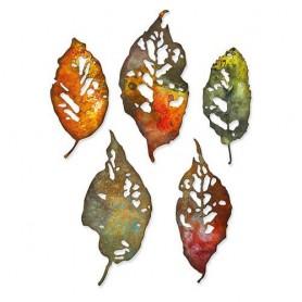 Sizzix Thinlits Die Set 5PK - Leaf Fragments - Tim Holtz